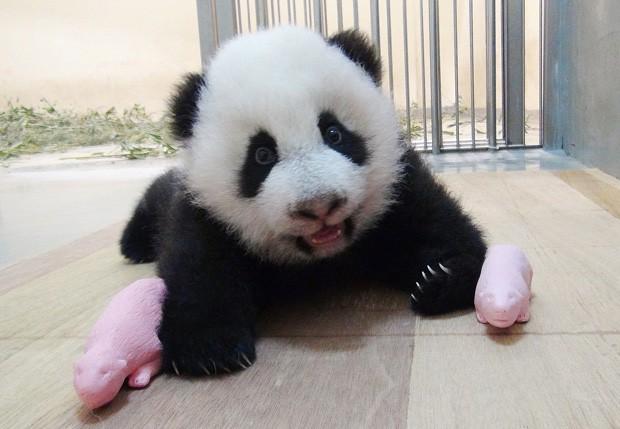 Reprodução: globo.com (AFP Photo/Taipei City Zoo)