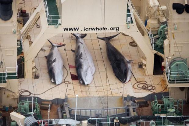 Reprodução: globo.com (Tim Watters/Sea Shepherd/AFP)